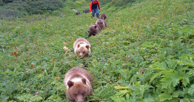 Reno Sommerhalder, fünf Bärenwelpen, Kamchatka, Foto: Charlie Russel