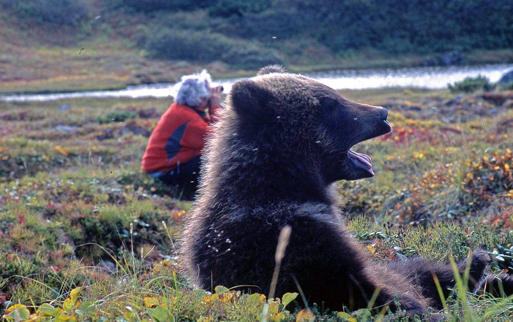 Charlie Russel, Braunbärenwelpe, Kamchatka, Foto: Reno Sommerhalder