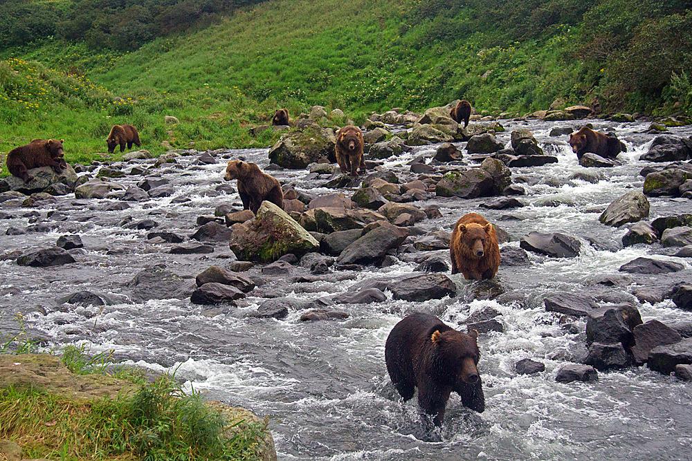 Bärenreiches Kamchatka, Foto: Reno Sommerhalder